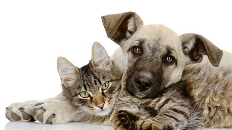 dogs as pets leigh dogs and cats home caring for pets throughout the