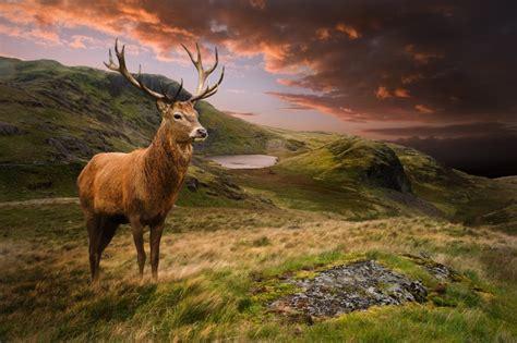 Do All Deer Shed Antlers by Do Deer Shed Their Antlers Wonderopolis