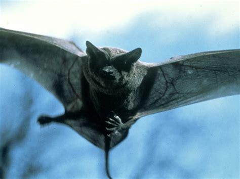 fotos animales nocturnos animales nocturnos taringa