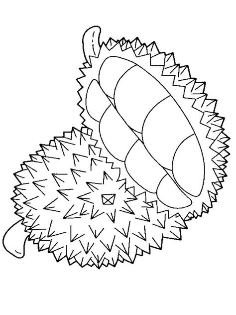 durian coloring page www pixshark com images galleries
