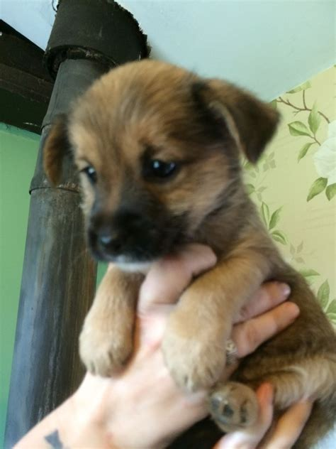 puppies for sale in plymouth puppies for sale plymouth pets4homes