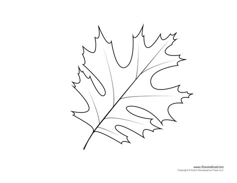 leaf templates leaf coloring pages for kids leaf