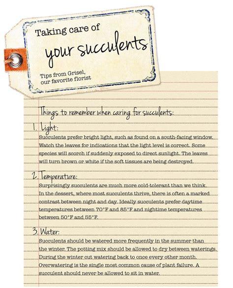 succulent care tips work pinterest
