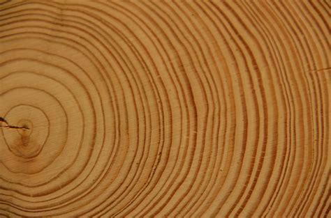 le holzstamm photo gratuite bois cernes annuels arbre log image