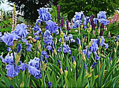 portland  daily photo artsy fun  monets blue