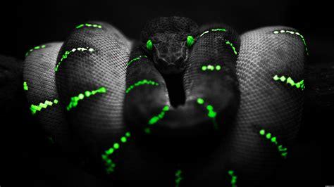 snake tattoo designes best hd wallpapers black snake wallpaper wallpapersafari