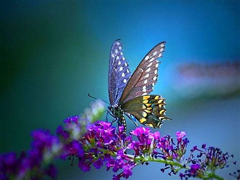 wallpaper computer background free free butterfly desktop backgrounds wallpaper cave