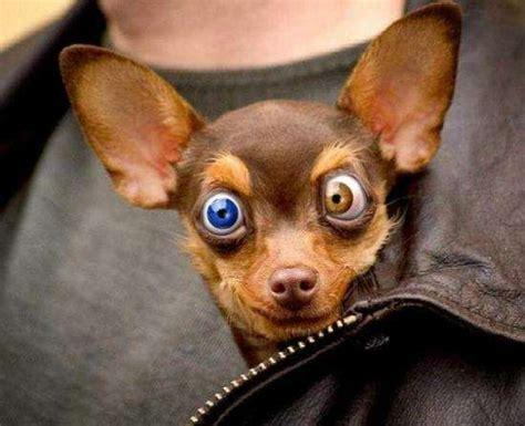 fotos chistosas de personas  animales muy locos fress
