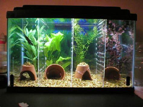 Handmade Aquarium - diy aquarium tank dividers petdiys