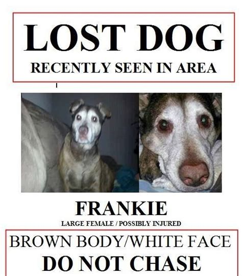 design a poster on your missing pet dog missing for over a year reunited with owner 171 cbs boston
