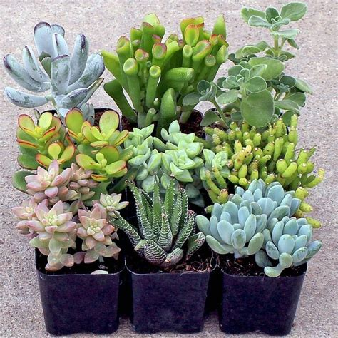 low light succulents 170 best images about driftwood on driftwood fish driftwood coffee table and drift wood