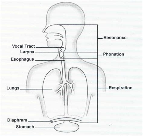 respiratory system diagram simple lung diagram for my site daot tk