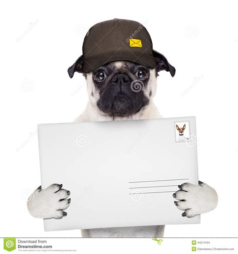 puppy delivery delivery post stock photo image of animal courier 44274164