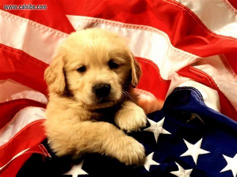 american dogs miscellaneous and american flag picture nr 12676