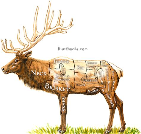 how to a to hunt how to hunt elk with a bow hunt hacks