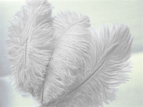 ostrich feather centerpieces for sale 36 pcs 10 15 quot genuine ostrich feathers for wedding