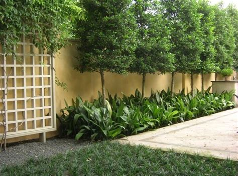 privacy trees for small yards torres tree service
