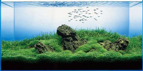 membuat background aquascape panduan membuat gaya aquascape iwagumi