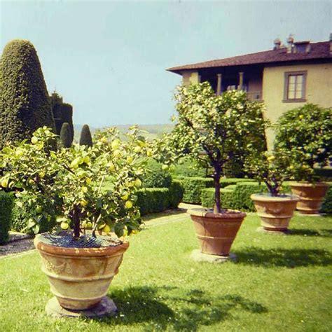 patio lemon tree potted lemon tree image credit florence tuscany