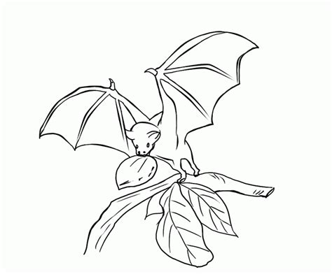 stellaluna coloring pages coloring home