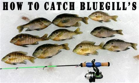 where when and how to catch fish on the east coast of florida classic reprint books secrets to catching bluegill fishing tips for beginners