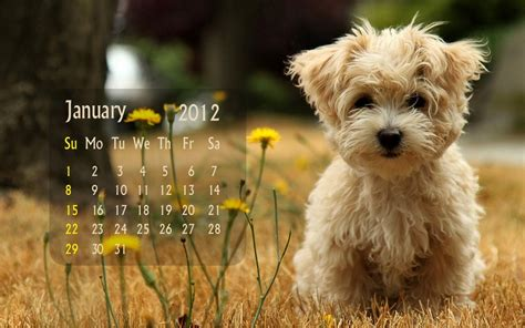 new year january animal photo trick animal new year 2012 calendars hd wallpapers
