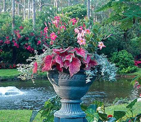 Pot Gardening Ideas Container Gardening Tips Ideas Flower Plant Container Gardening 187 Denbok Landscaping Design