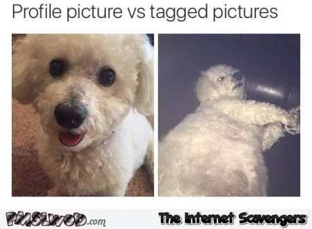 Profile Picture Memes - silly tuesday pictures a collection of internet funnies