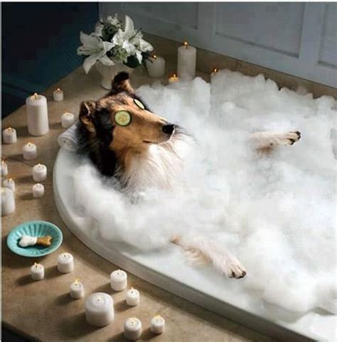 dog house spa most expensive holiday for dog costs a whopping 163 47 000 elite choice