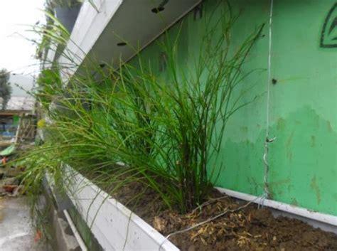 vertical garden project  warnai desa  tieng wonosobo
