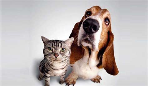 imágenes artísticas de gatos 191 c 243 mo viajar a lanzarote con mascota vivalanzarote es