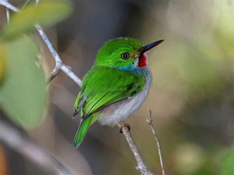 the smallest bird in the world bee humming bird animal