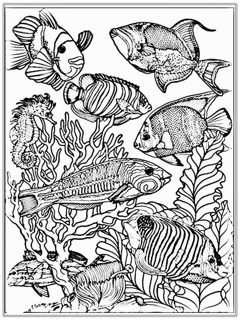 coloring pages for adults underwater adult free fish coloring pages realistic coloring pages