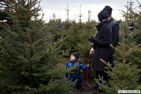 weihnachtsb 228 ume selbst schlagen in mellensee bei berlin