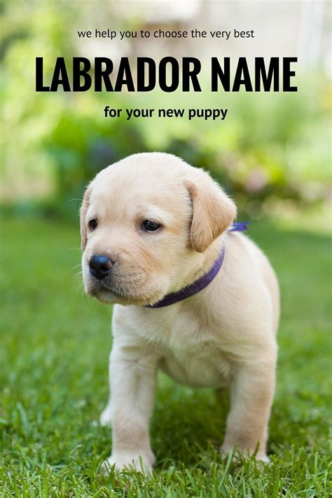 Exceptional Female Puppy Names #2: 0001-132145083.jpg
