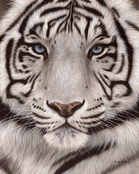 printable tiger eyes 25 best ideas about tiger painting on pinterest tiger