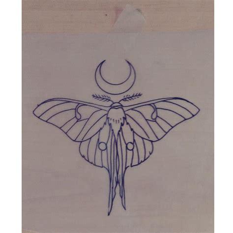 luna moth drawing by laura carney tattoo design