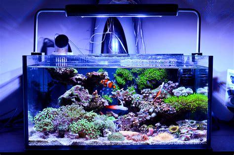 Ninjamyst's 12.5 gallon shallow cube communal nano reef