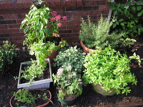 10 tips for growing your own herb garden outdoor living 10 tips for growing your own herb garden outdoor living