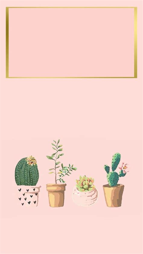 wallpaper for iphone cactus iphone wallpaper iphone background succulent cactus