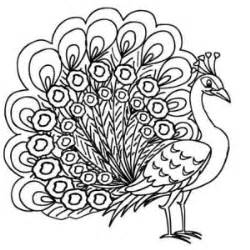 indian peacock coloring page an elegant peafowl male peacock coloring page an elegant