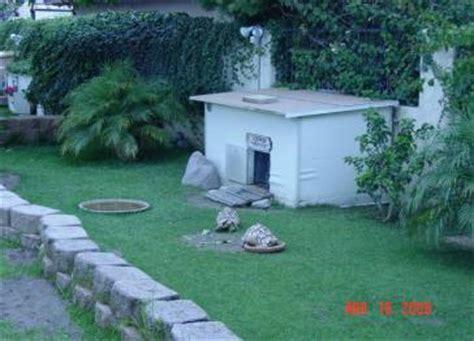 sulcata tortoise house sulcata tortoise care information