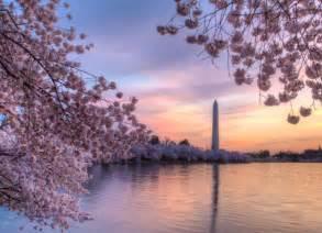 Cherry Blossom Images best of the 2017 cherry blossom festival washington dc