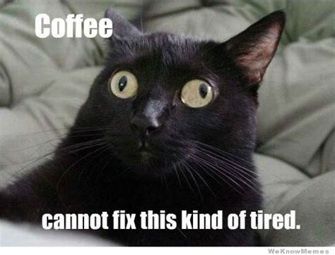 Tired Cat Meme - coffee cannot fix this kind of tired weknowmemes