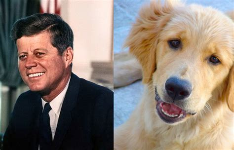 taft golden retrievers these 22 animals totally look like these presidents and i m laughing way
