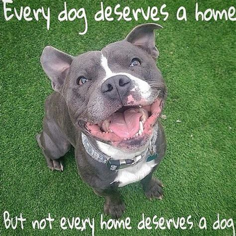 Every Home by 33 Inspirational Quotes Spartadog