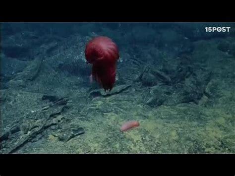 imagenes raras del fondo del mar raras especies marinas descubiertas al fondo del oceano