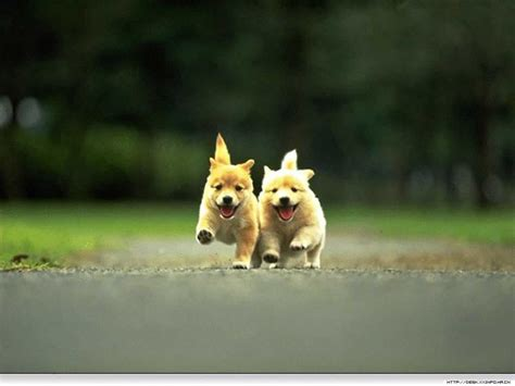 cute dogs and puppies wallpapers wallpaper cave cute puppy backgrounds wallpaper cave