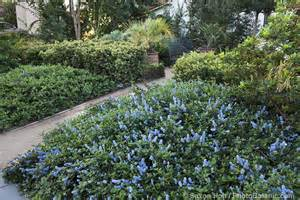 william s main s blog gardening with native plants