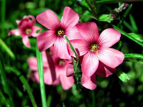 e fiori galleria fotografica di elisa bistocchi fiori e piante
